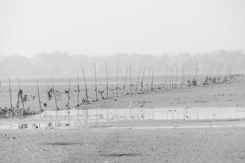 印度, 單色, 天, 天性 的 免费素材照片