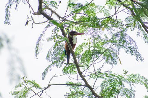 印度, 天, 天性, 樹 的 免费素材照片