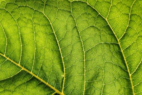 Green-leaf Close-up Photo