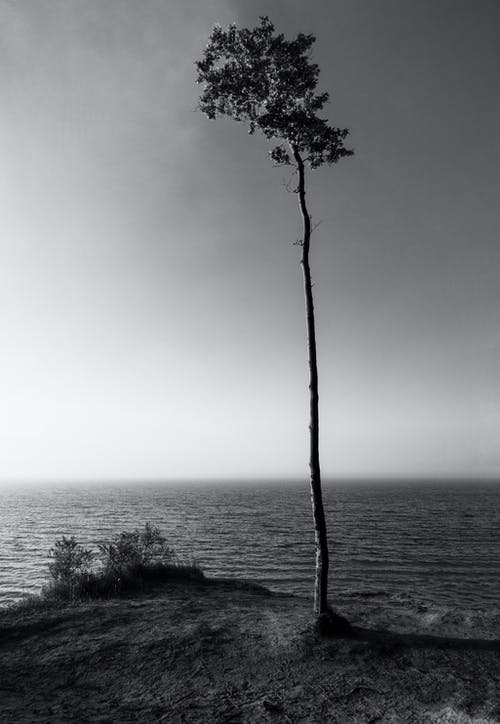 Tree Beside Body of Water