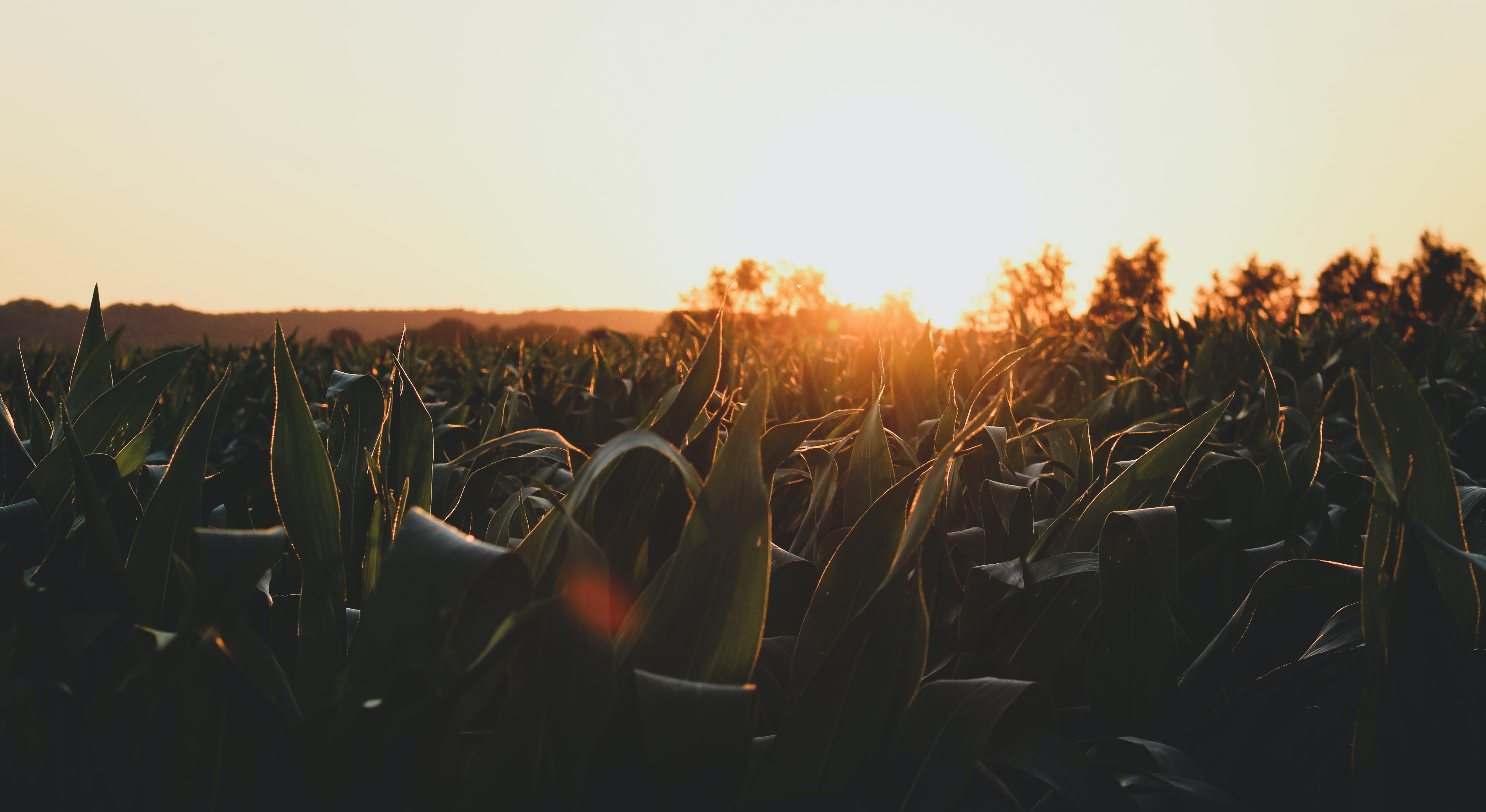 Ingyenes stockfotó blätter, feld, pflanzen, sonne témában