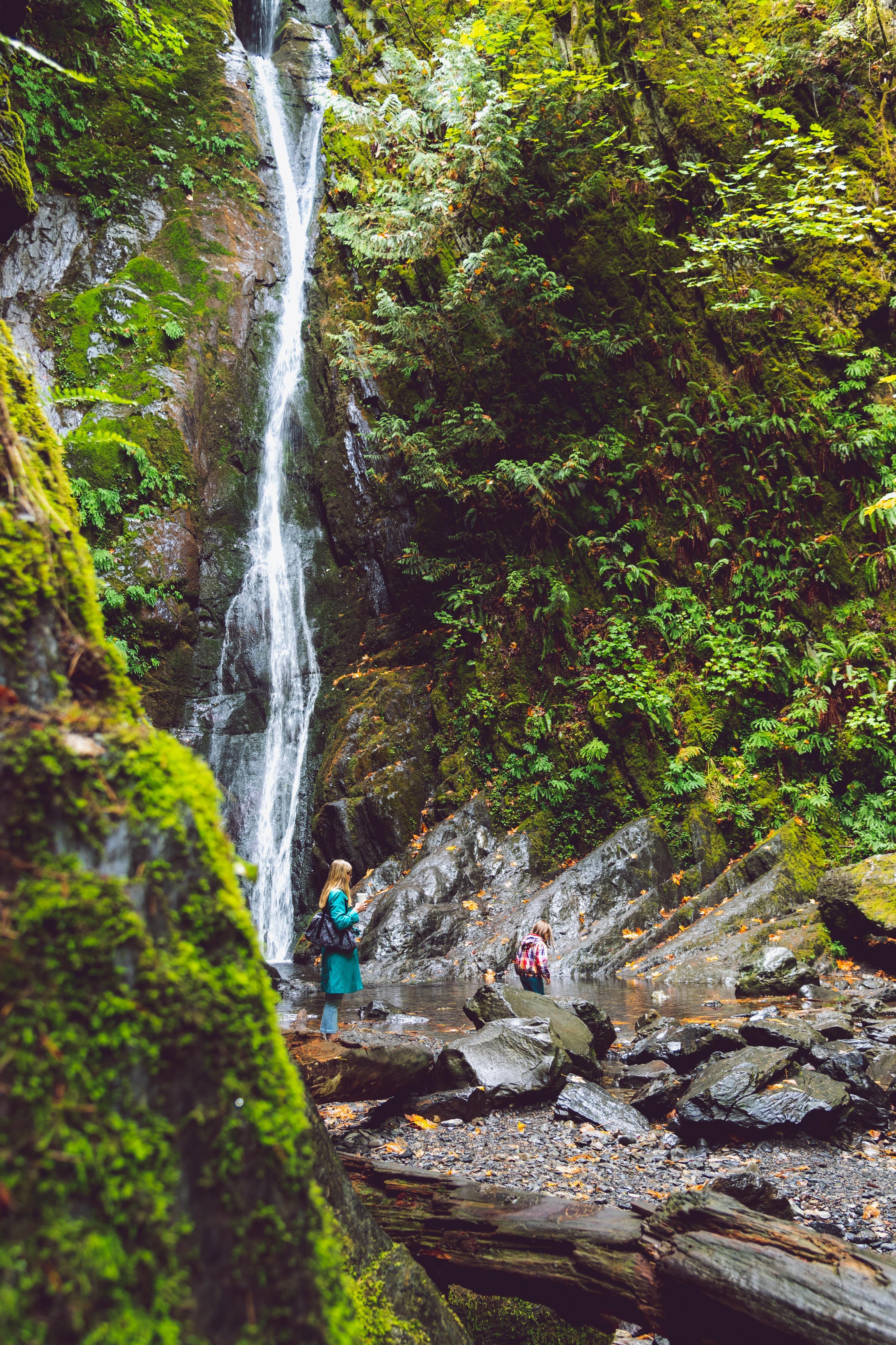 Foto d'estoc gratuïta de a l'aire lliure, aigua, bosc, Canadà