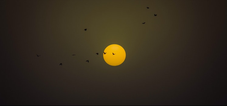 Free stock photo of sunset, sun, evening, birds