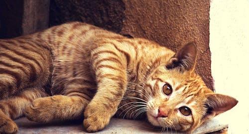 Základová fotografie zdarma na téma CC0, domácí mazlíček, hravý, kočka
