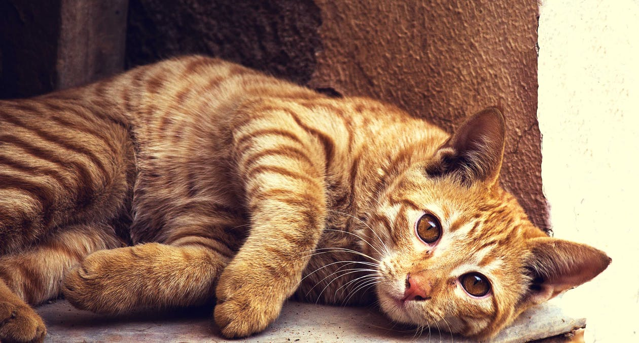 Orange Tabby Cat Lying on Concrete Surface