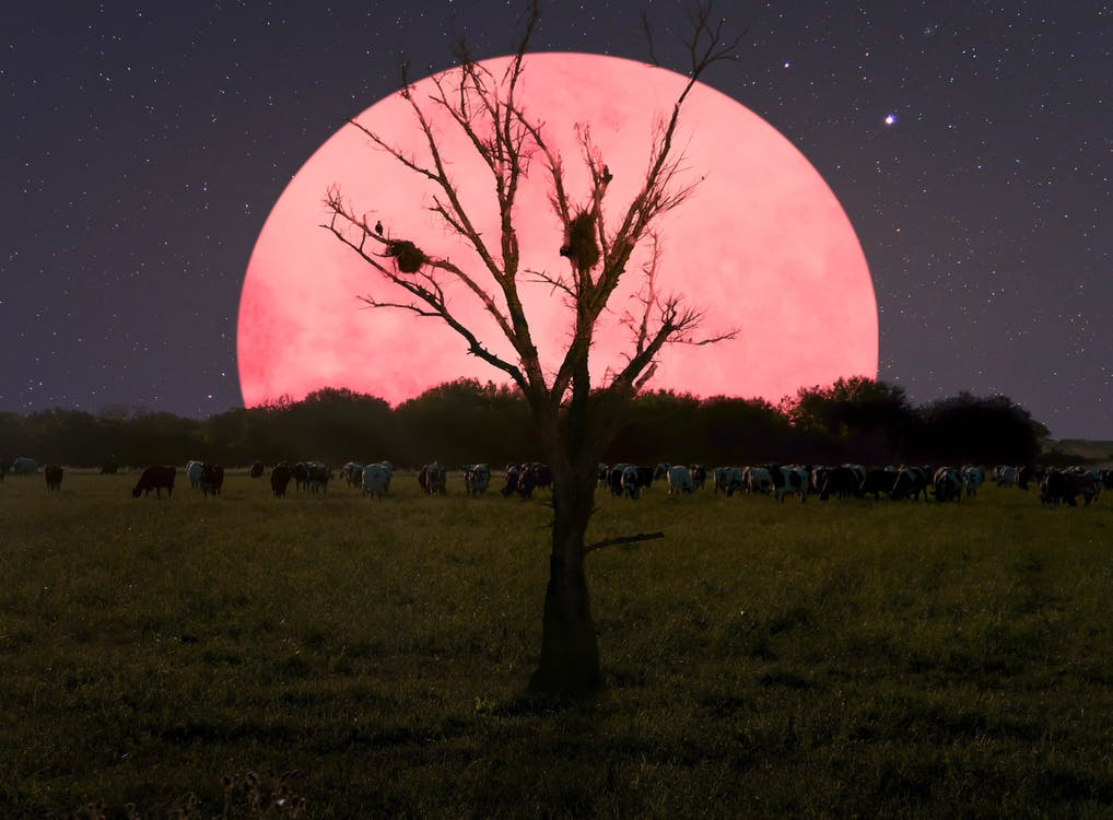 晚上, 月亮, 樹木