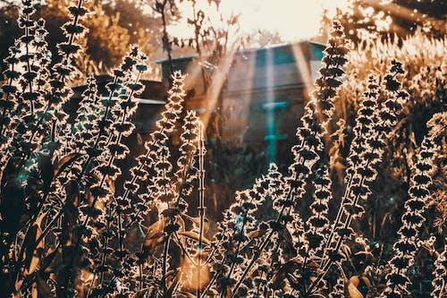Základová fotografie zdarma na téma podsvícení, rostlina, silueta, tráva