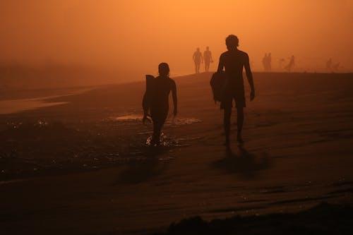 Free stock photo of backlight, golden hour, sunset