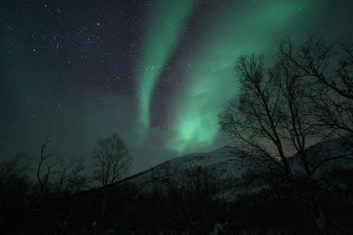 Free stock photo of aurora borealis, night lights, norway