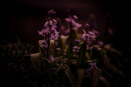Foto d'estoc gratuïta de #naturalesa, flor, flor bonica, flors