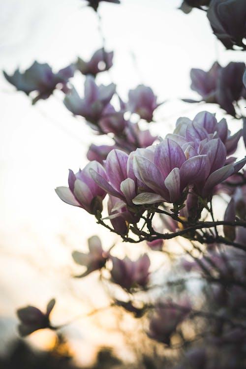 Imagine de stoc gratuită din crengi, creștere, culori, floare