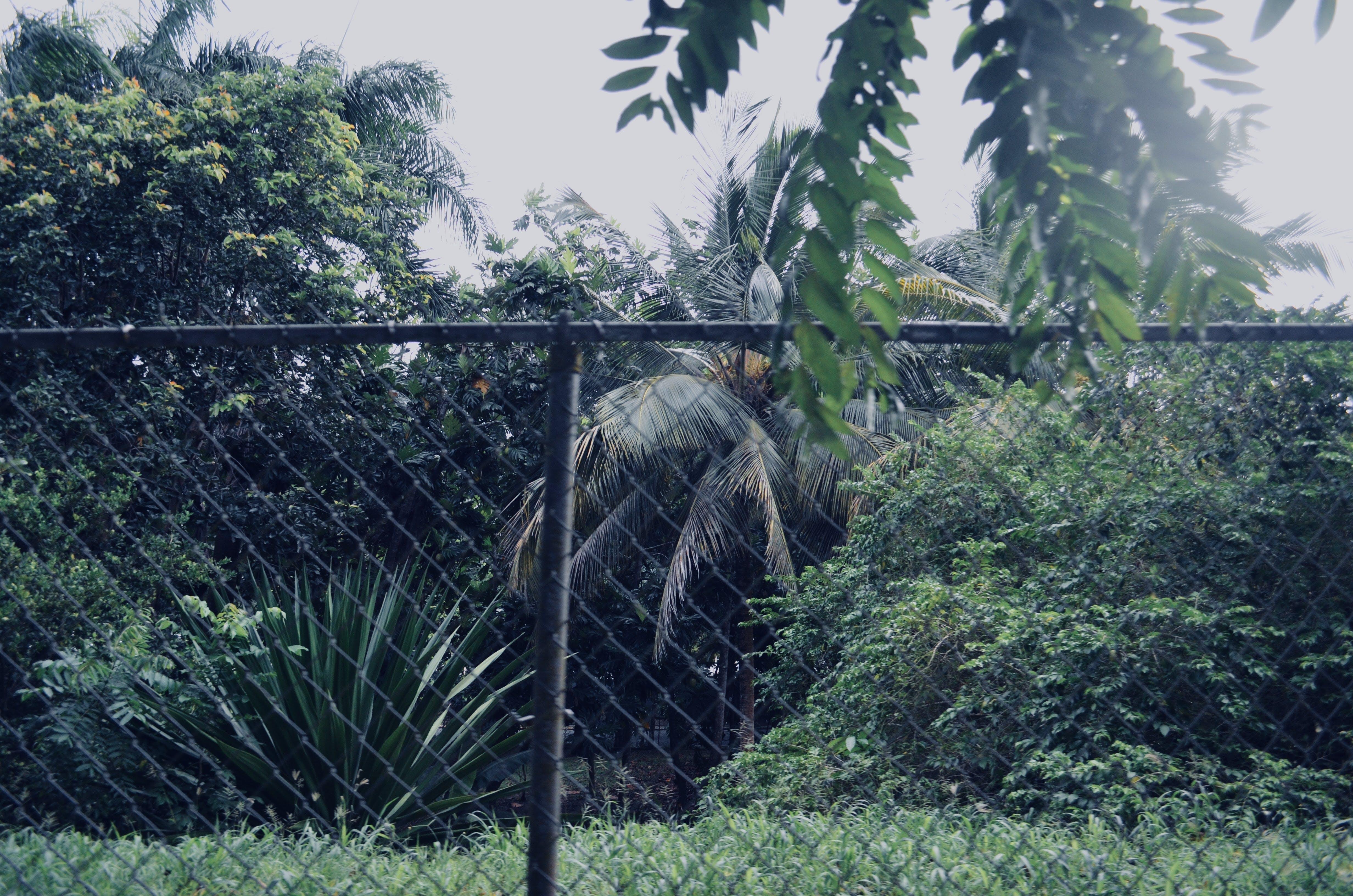 Δωρεάν στοκ φωτογραφιών με δάσος, ζούγκλα, ξιφασκία, ξίφη