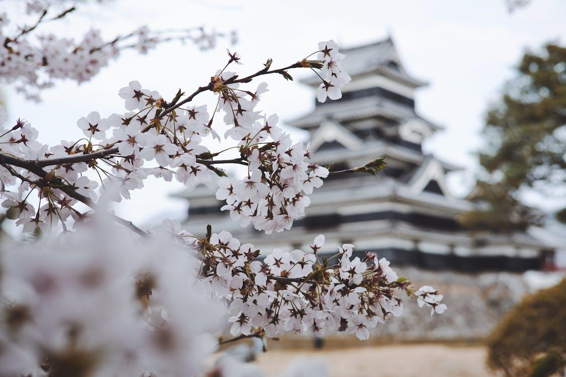 白色花瓣花