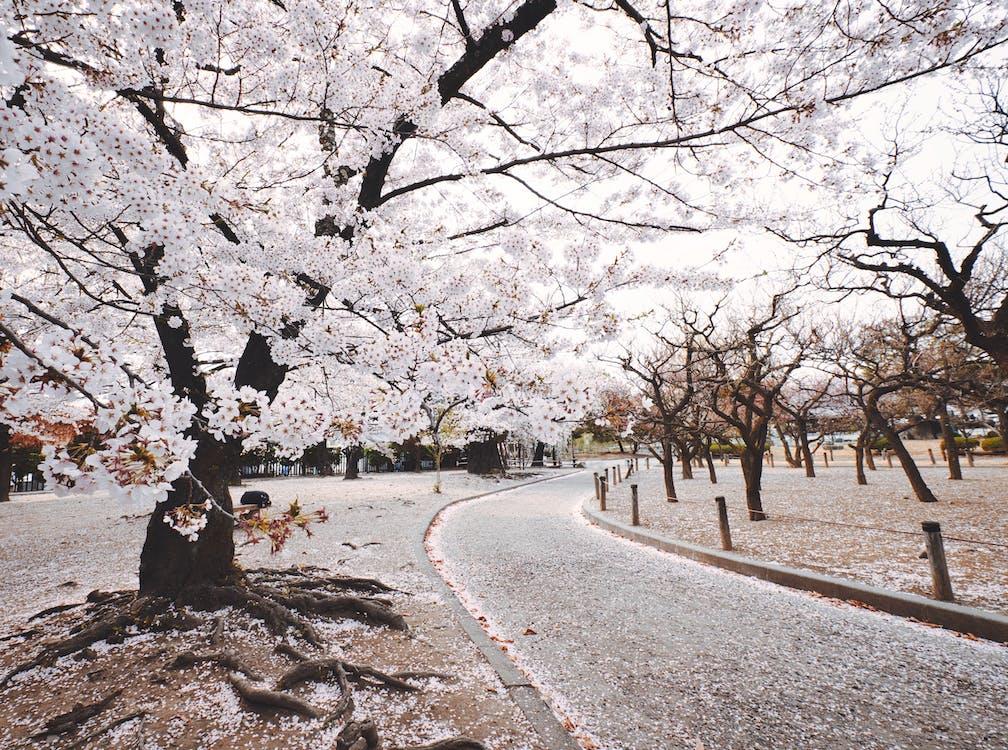 White Tree Beside Pathway