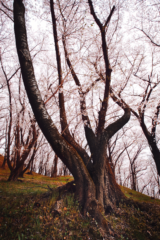 ágak, évszak, fák