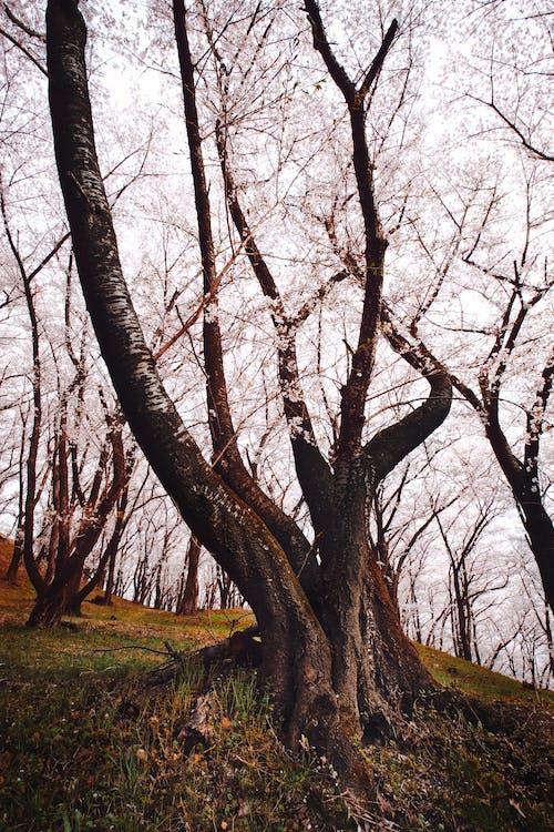 Gratis arkivbilde med årstid, grener, japan, nagano