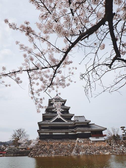 Gratis stockfoto met architectuur, Azië, boom, jaargetij