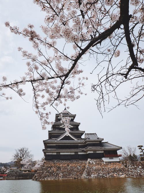 Gratis arkivbilde med arkitektur, årstid, gren, japan