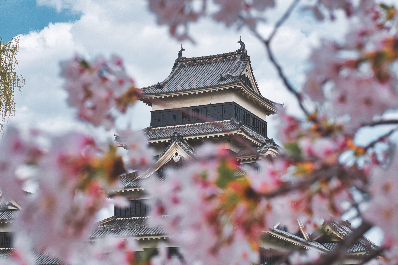 ág, cseresznyevirág, építészet