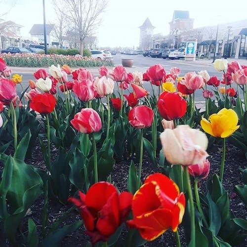 아름다운 꽃, 콜로라도의 무료 스톡 사진