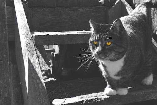 Free stock photo of barn cat, cat