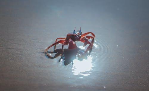 Fotos de stock gratuitas de #agua, animal, animal pequeño, cangrejo