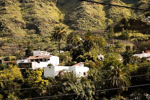 Free stock photo of jungle, mountain, nature