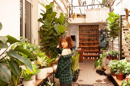 Бесплатное стоковое фото с азиатка, в помещении, вьетнам, горшки