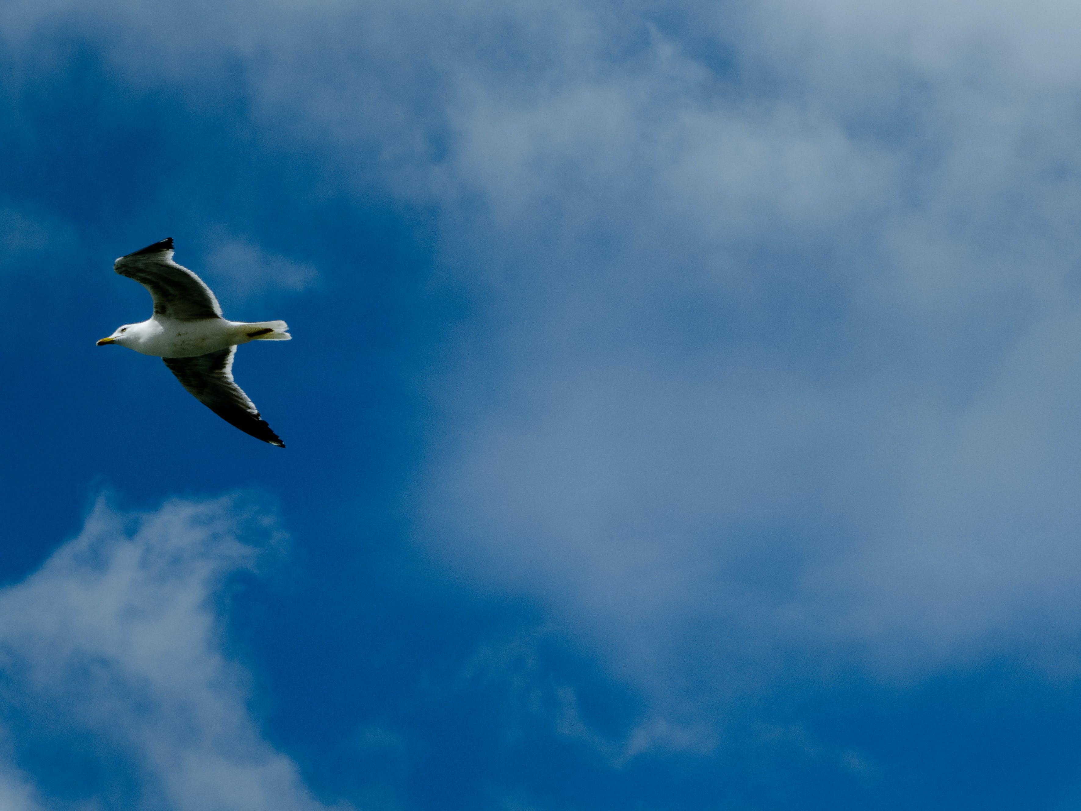 Δωρεάν στοκ φωτογραφιών με γαλάζιος ουρανός, θαλάσσιο πουλί, κλουβί, μπλε