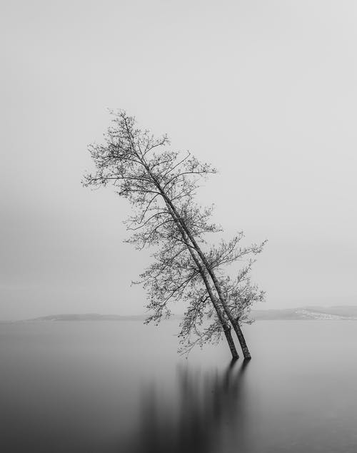 Grayscale Photography of Leaning Tree in Body of Water
