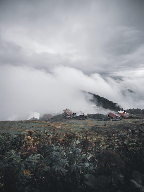 Δωρεάν στοκ φωτογραφιών με βουνά, γρασίδι, γραφικός, δασικός