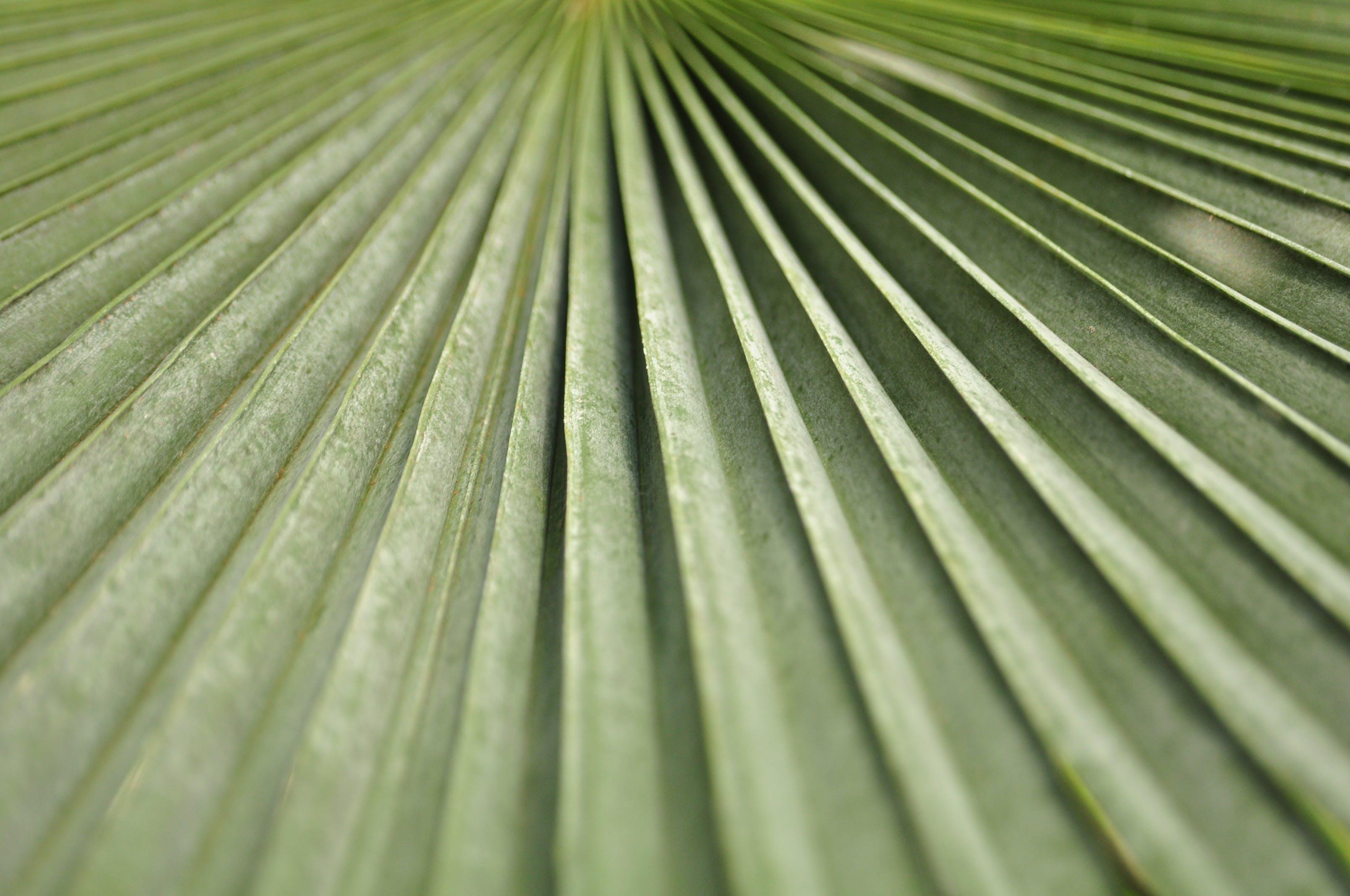 Kostenloses Stock Foto zu blatt, farn, grün, nahansicht