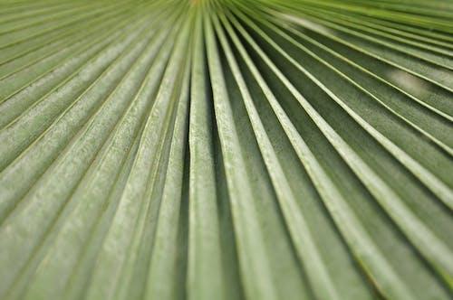 Darmowe zdjęcie z galerii z liść, liść palmy, natura, paproć