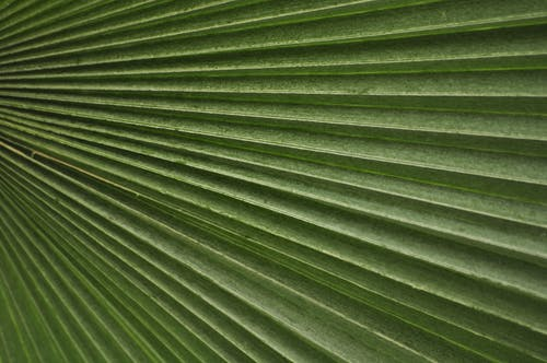 Gratis stockfoto met blad, close-up, detailopname, groen