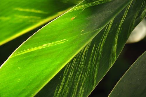 Základová fotografie zdarma na téma čistota, list, rostlina, růst