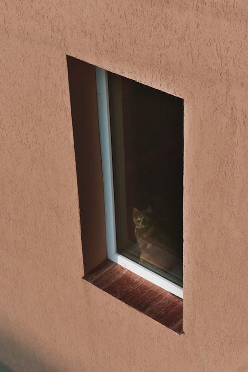 インドア, ネコ, 動物, 壁の無料の写真素材