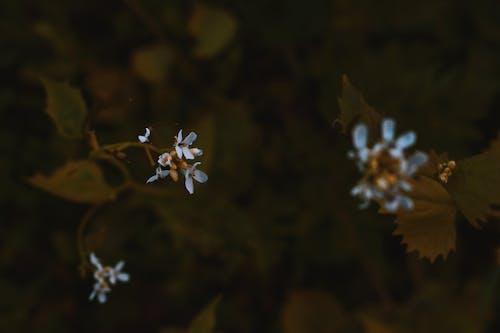 คลังภาพถ่ายฟรี ของ กลีบดอก, ดอกไม้, ต้นไม้, พฤกษา