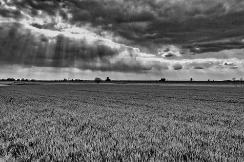 Free stock photo of b&w, chanpagne, france, landscape