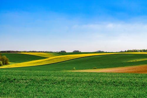 乾草地, 乾草田, 增長, 天性 的 免费素材图片