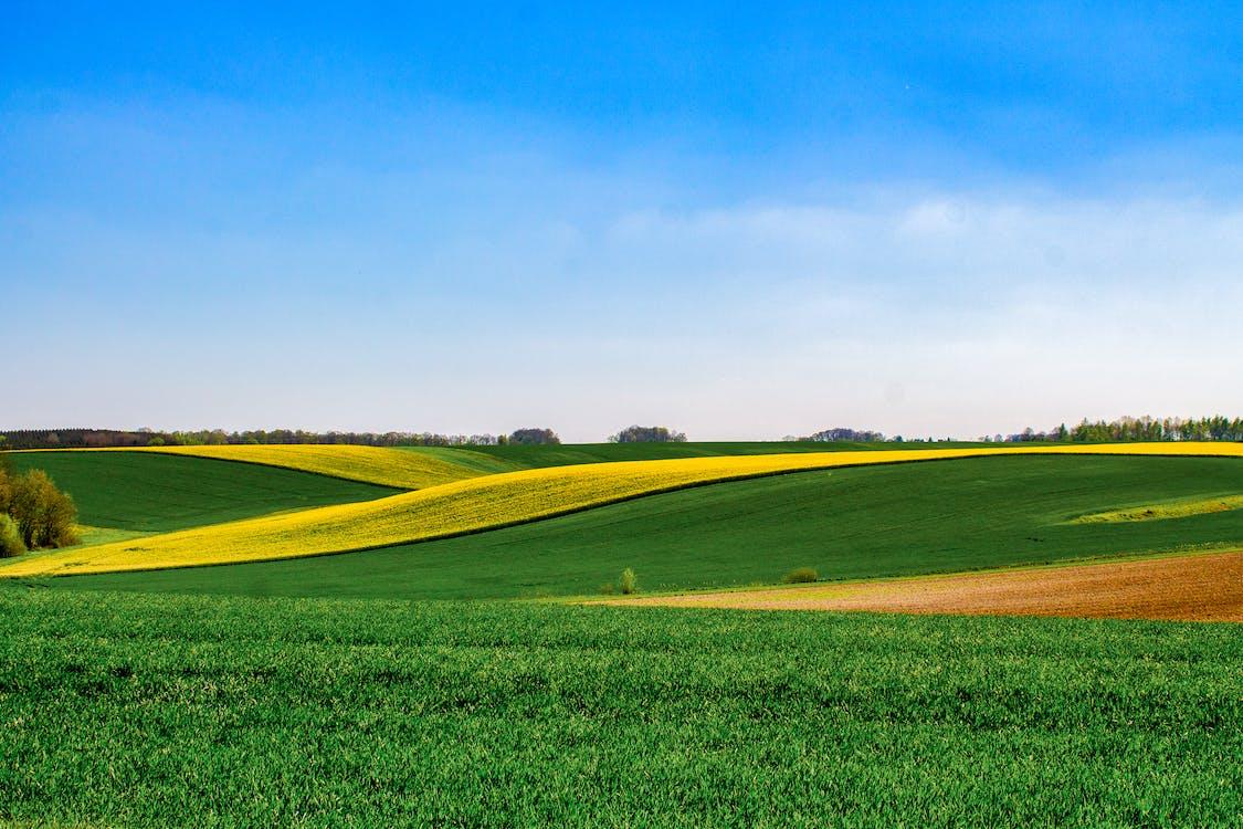 a l'aire lliure, agricultura, camp