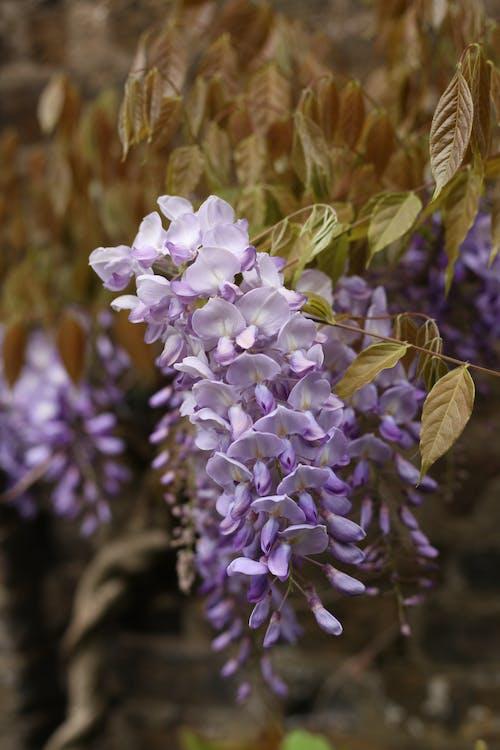 Fotobanka sbezplatnými fotkami na tému nádherné kvety, ružové kvety