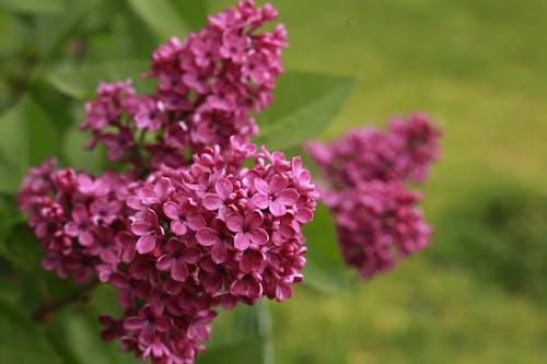 Fotobanka sbezplatnými fotkami na tému kvety, nádherné kvety, ružové kvety