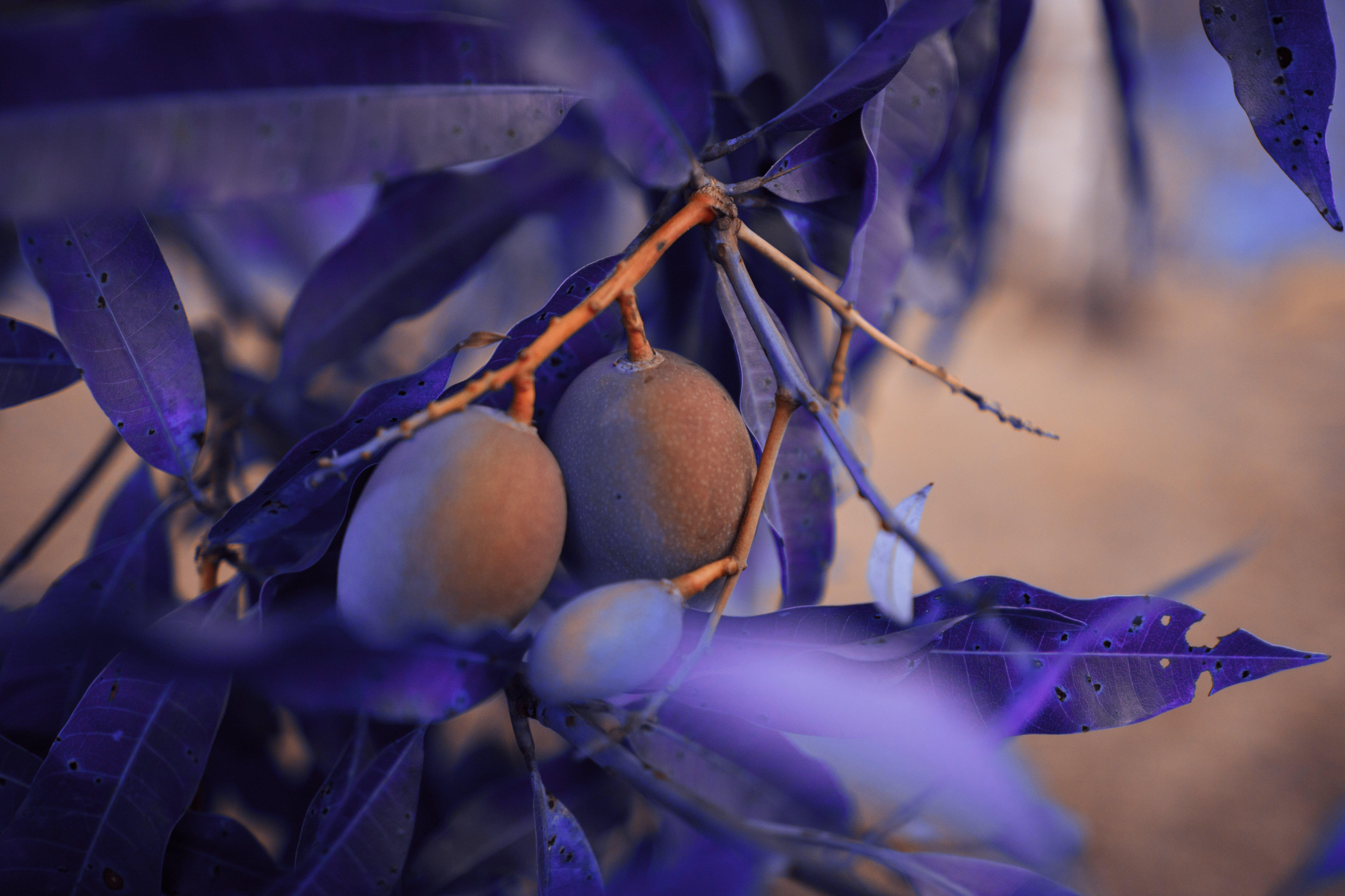 Kostnadsfri bild av färg, gren, hängande, lila