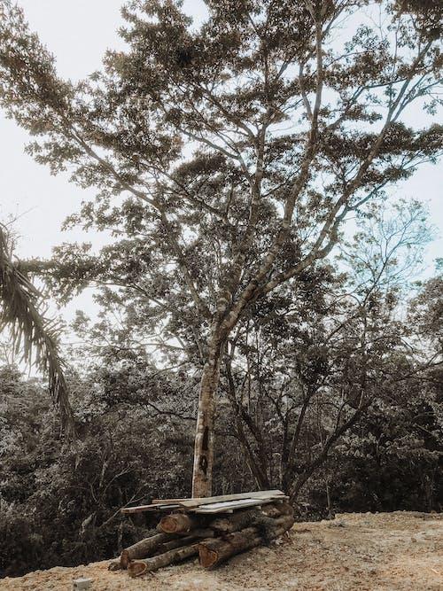 Gratis lagerfoto af grene, miljø, natur, Panama
