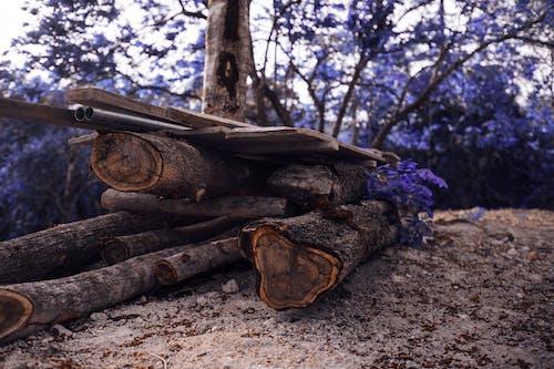 คลังภาพถ่ายฟรี ของ กลางวัน, กลางแจ้ง, กองฟืน, กองไม้