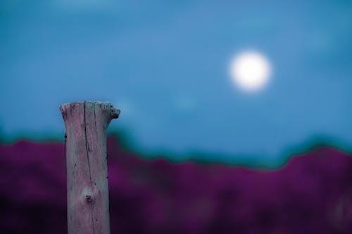 Foto d'estoc gratuïta de a l'aire lliure, abstracte, art, brillant