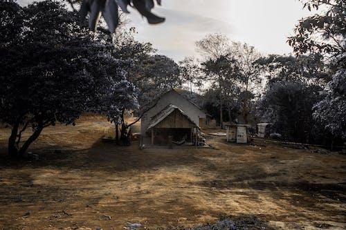 Imagine de stoc gratuită din acasă, arbori, brun, călătorie