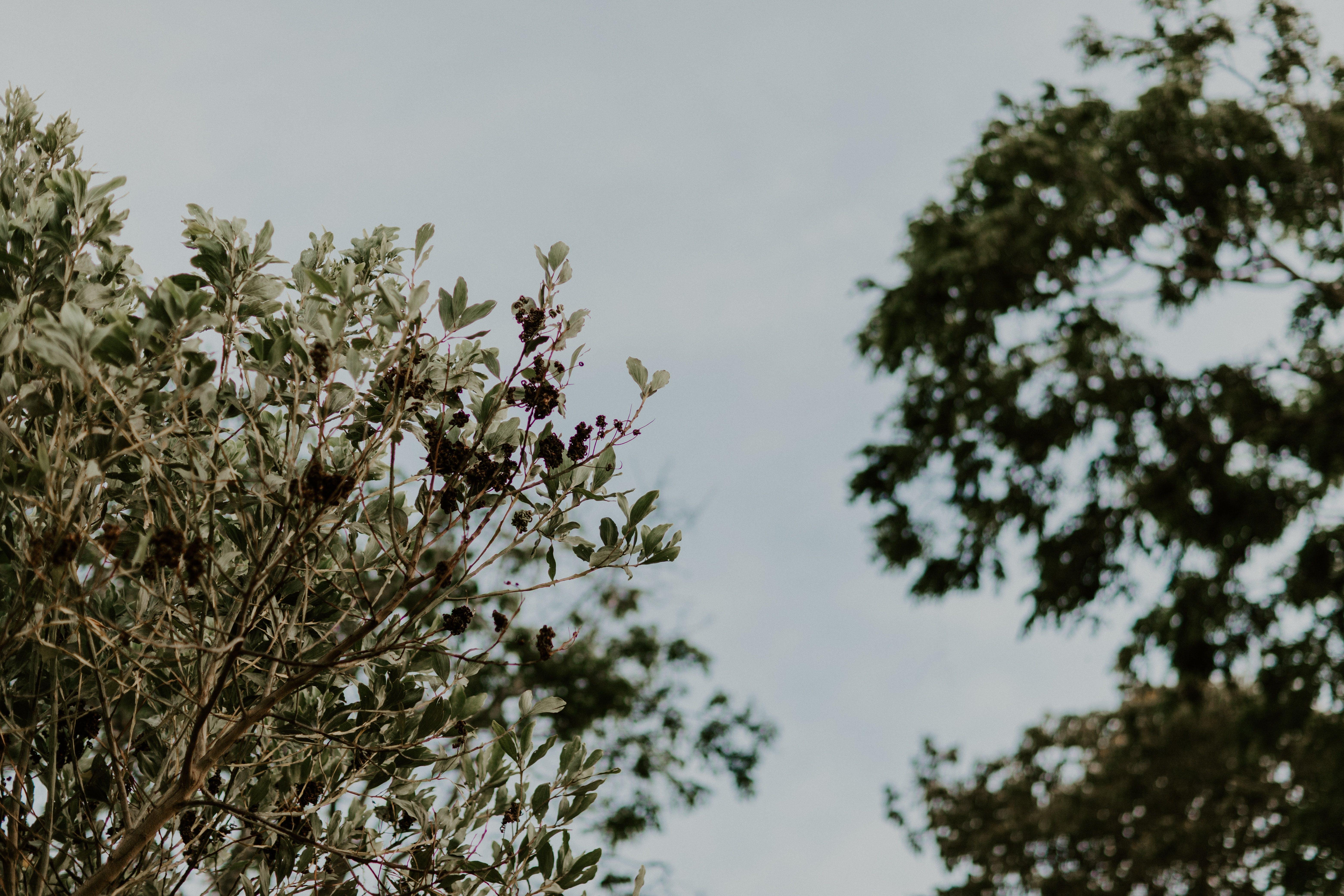 Ingyenes stockfotó ág, ágak, erdő, évszak témában