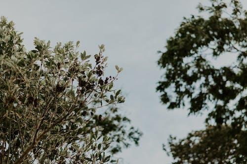 Безкоштовне стокове фото на тему «блакитне небо, відділення, гілки, дерева»