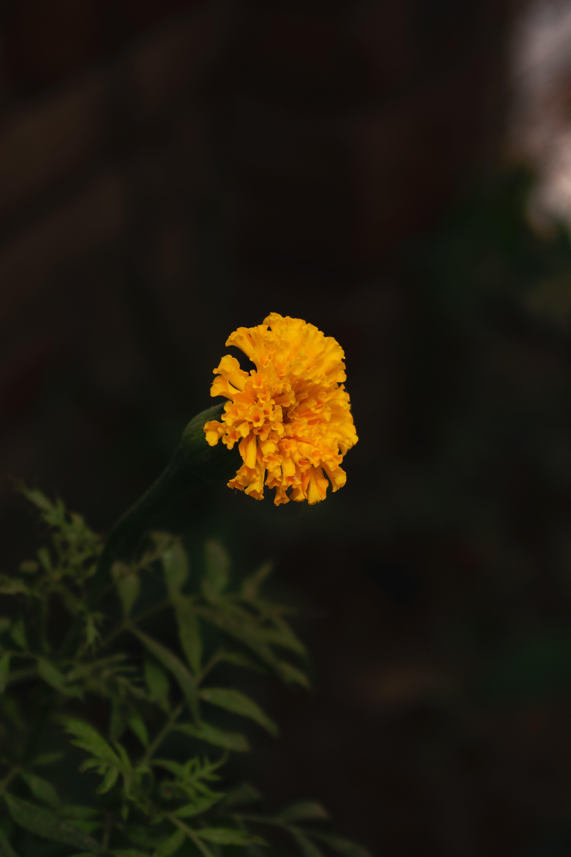 Foto d'estoc gratuïta de flor, fons de pantalla de flors, macro, natura